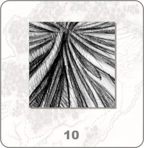 forestium-10