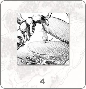 forestium-4