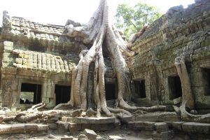 Travelling - Cambodia (ruins overgrown with banyan trees)