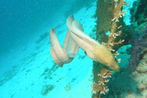 Near death experiences - Thailand (Emma the Giant Mooray Eel)