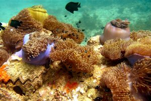 Travelling - Thailand (coral reef)